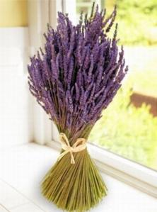 מילונים בוטניים: צמחים, פרחים ותבלינים